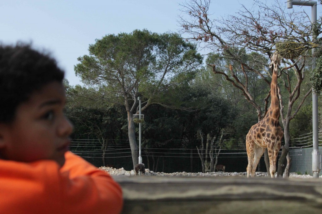 girafe13