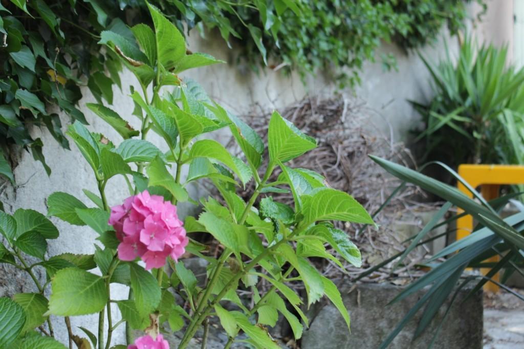 au jardin23