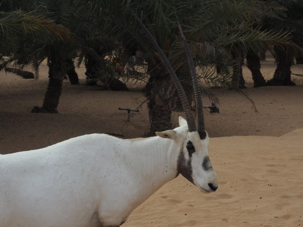 Dubaï Desert