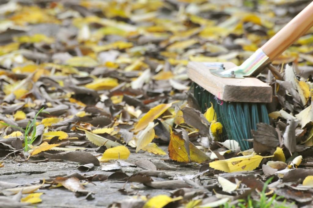 Violette feuilles2
