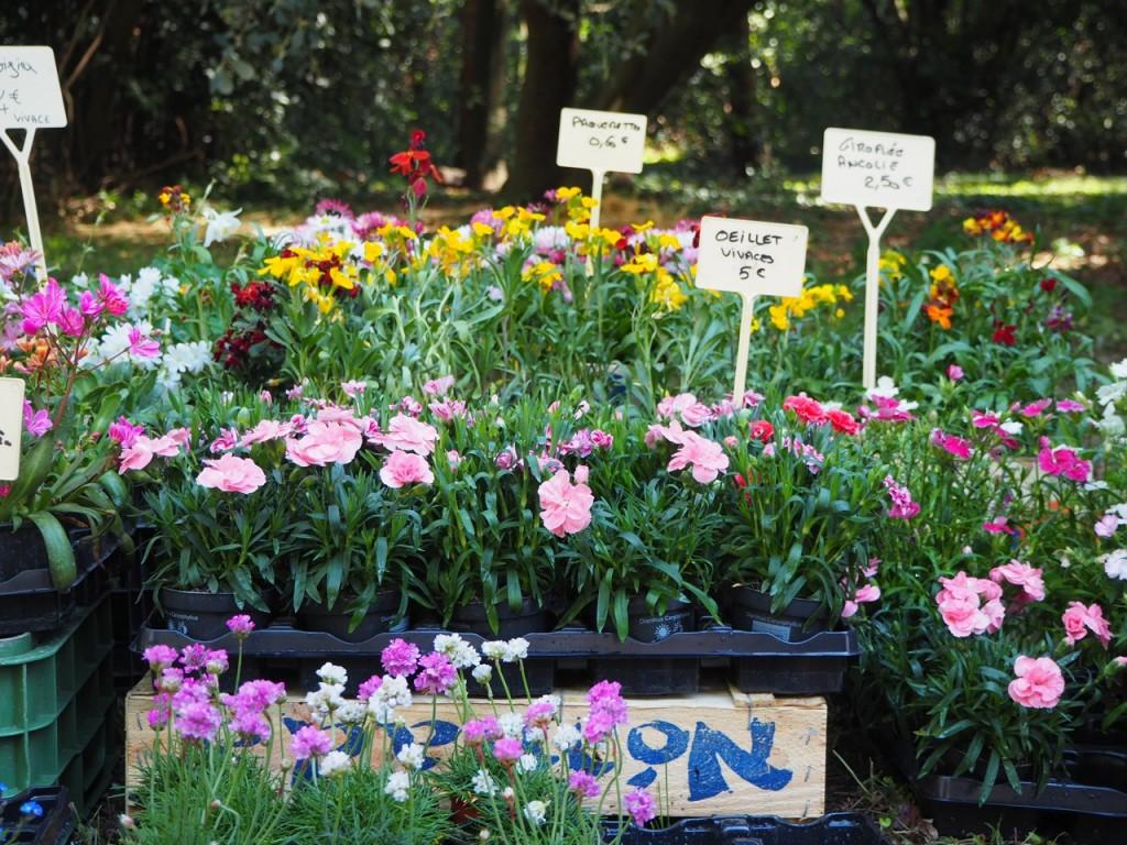 floralies campuget