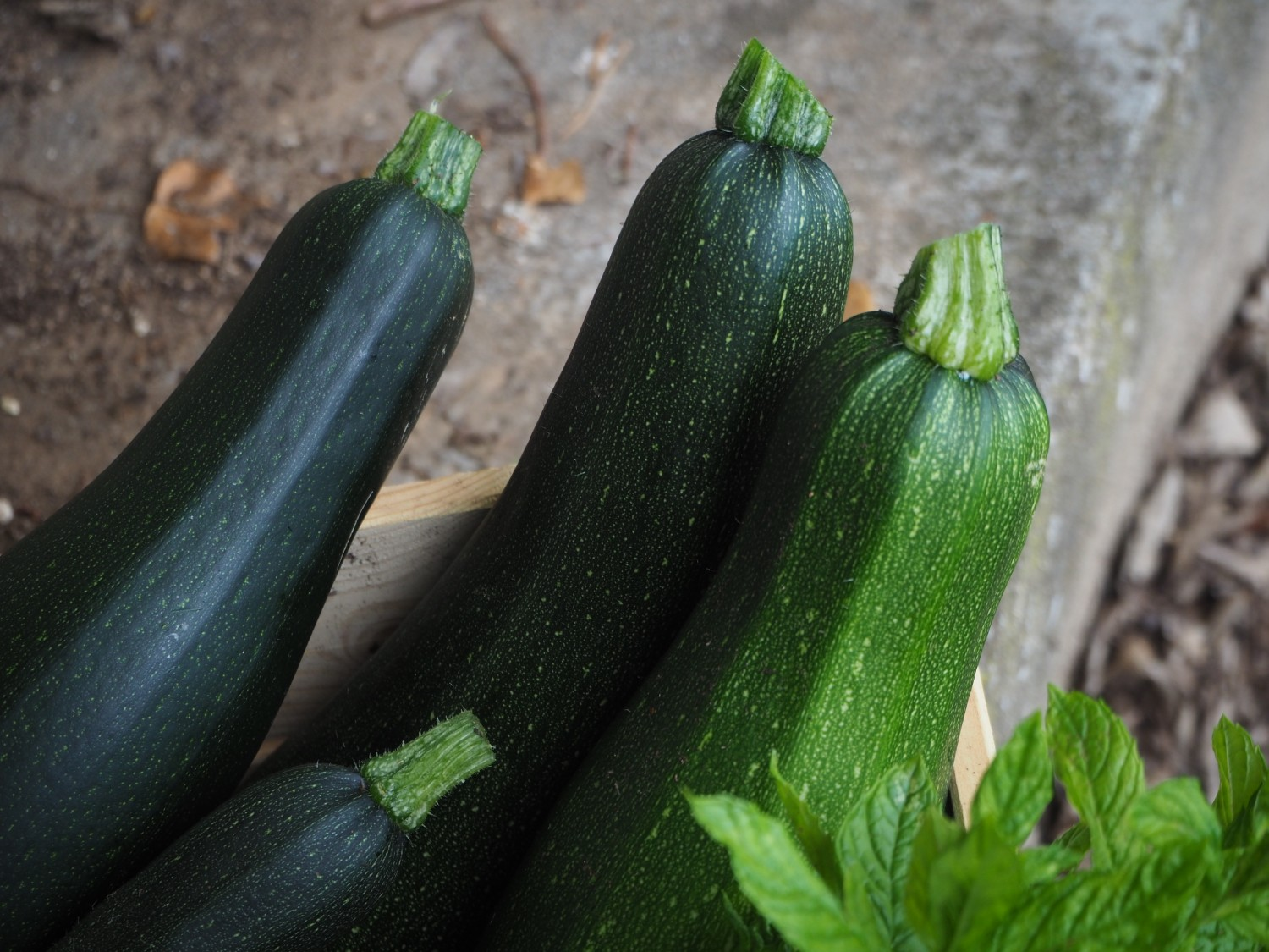 courgette ritalechat